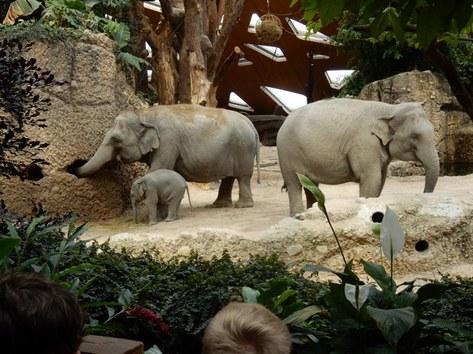 Bei den Elefanten