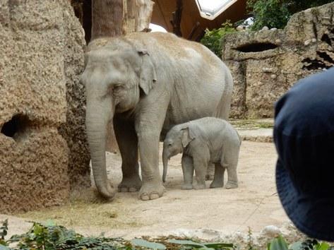 Elefantenbaby  Ruwani
